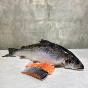 whole-fish-sashimi-grade-norway-salmon-steakcut-filletcut
