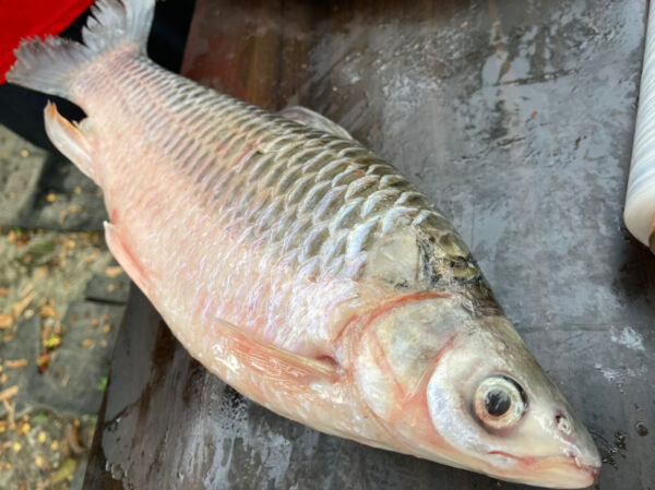 wild-river-fish-bigprawn.shop